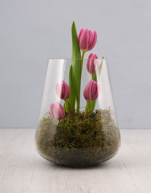 apology: Purple Tulip Moss!