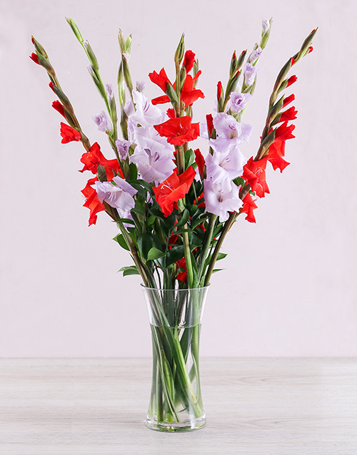 colour: Purple and Red Gladiolus Vase!