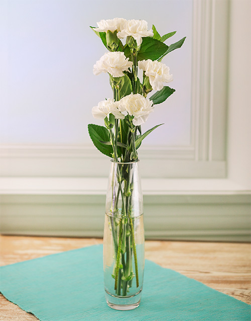 carnations: Simply Six White Carnations!