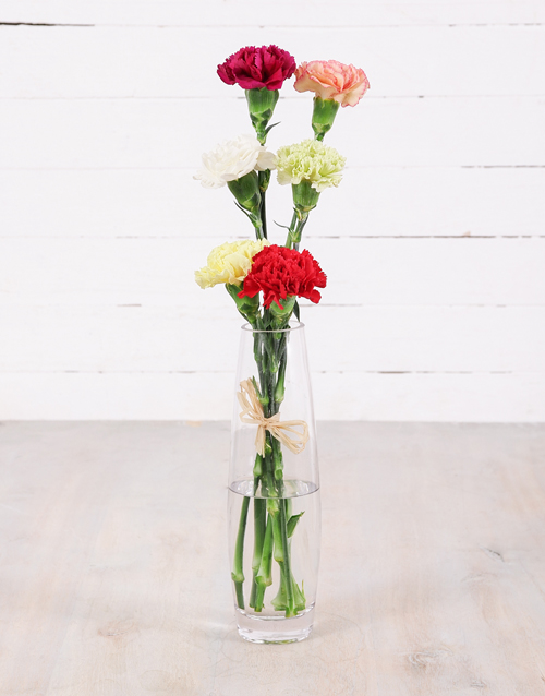 colour: Simply Six Mixed Carnations!