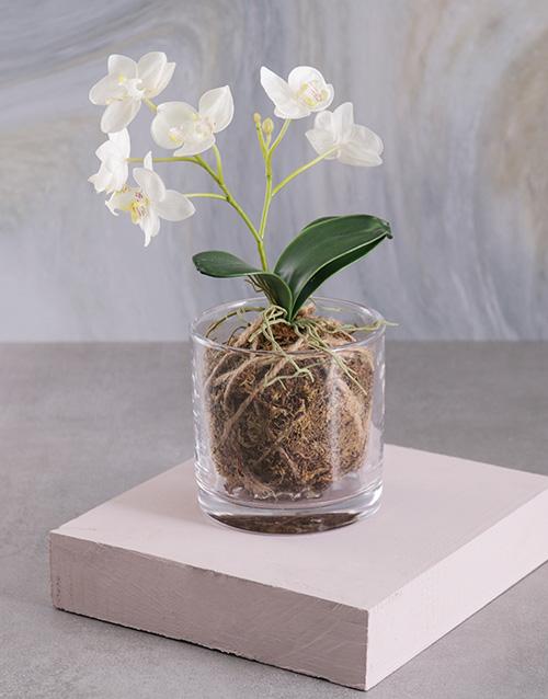 silk: Silk Phalaenopsis Orchid in a Clear Vase!