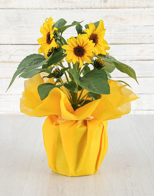 colour: Magical Sunflower Pot!