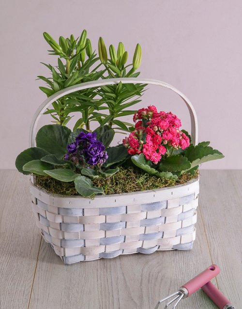 basket: Lily African Violet and Kalanchoe Trio!