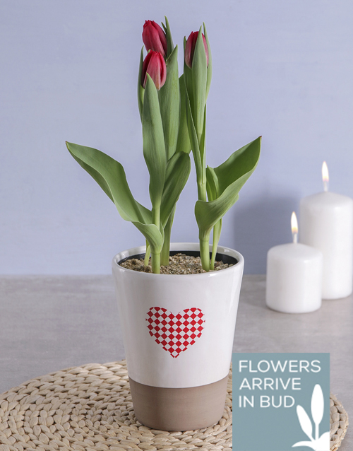 tulips: Red Tulips in Heart Pot!