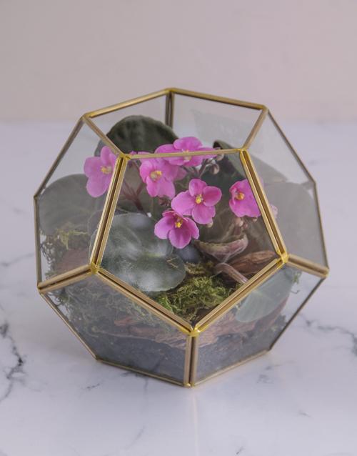 anniversary: Glamorous African Violet Terrarium!