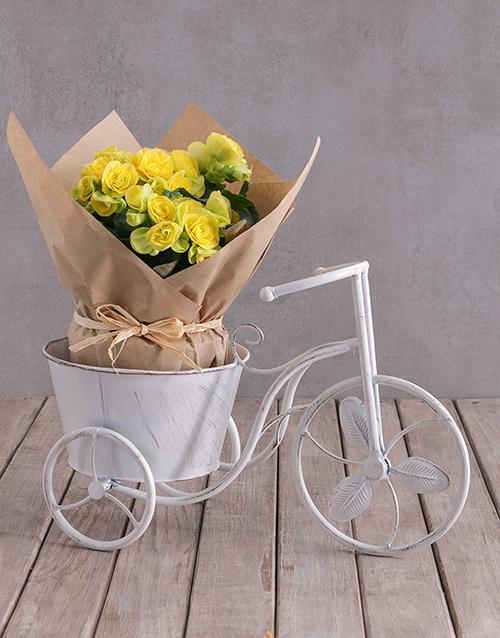 colour: Yellow Begonia In Bike Pot!