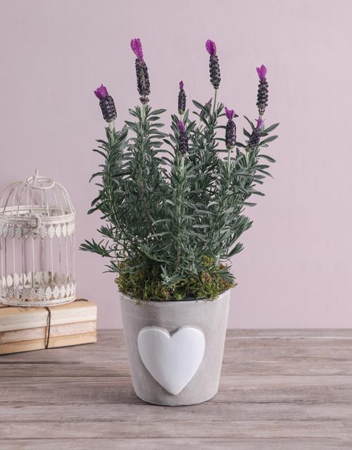 anniversary: Loving Lavender in Ceramic!