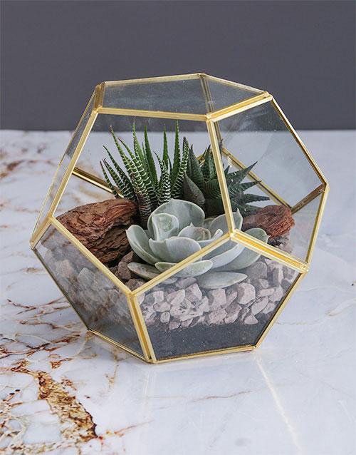 plants: Succulent in a Gold Geo Terrarium!