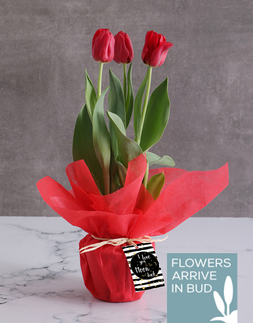 colour: Red Moon and Back Tulips!