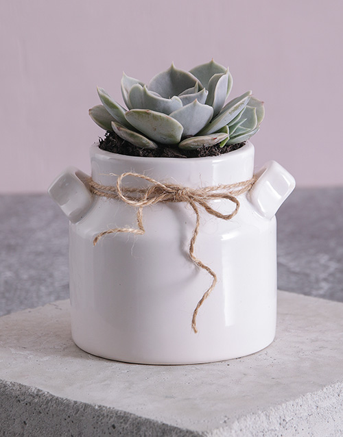 apology: Succulent in a Mini Milk Can Planter!