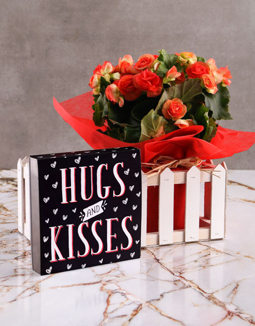 begonia: Hugs and Kisses Begonia Plant with Chocs!