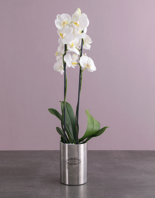 birthday: Personalised Orchid Pot Plant!