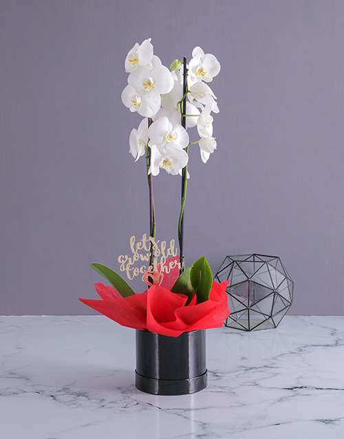 anniversary: Grow Old Together Orchid in a Hatbox!