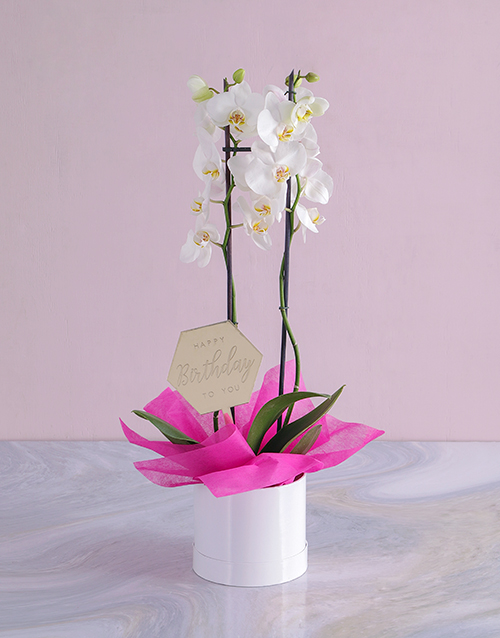 colour: Happy Birthday Orchid in a Hatbox!