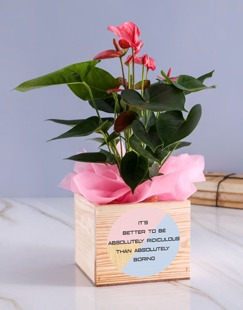 flowers: Absolutely Anthurium Plant!