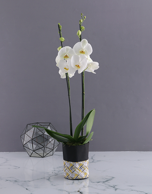 colour: Two Stemmed Orchid In Oriental Bag!