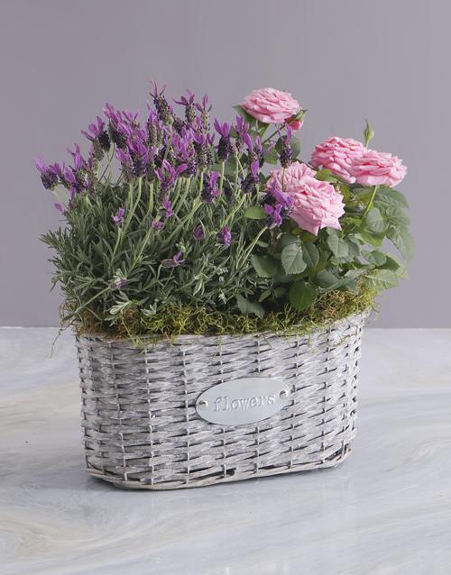 spring-day: Rose Blooms And Lavender Basket!