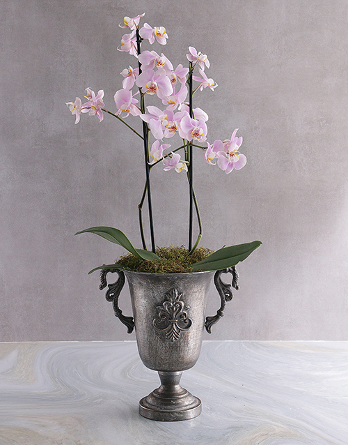 colour: Two Stemmed Orchid In A Silver Pot!