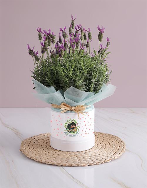 anniversary: Wrinkle Together Lavender Photo Vase!