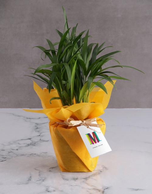 bosses-day: Personalised Cheerful Areca Bamboo!