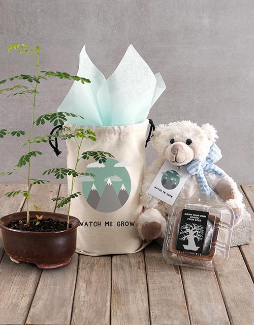christmas: Watch Me Grow Baobab Tree with Boy Teddy Plush!