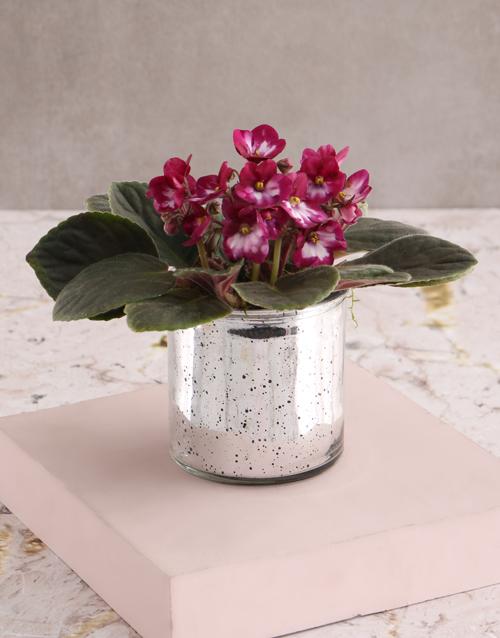 new-years: African Violet Surprise Gift!