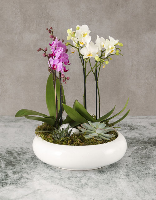 plants: Garden Of Orchids And Succulents!