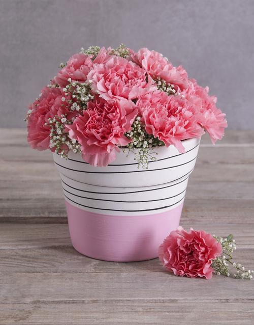 carnation: Bubblegum Pink Carnation in a Pink Pot!