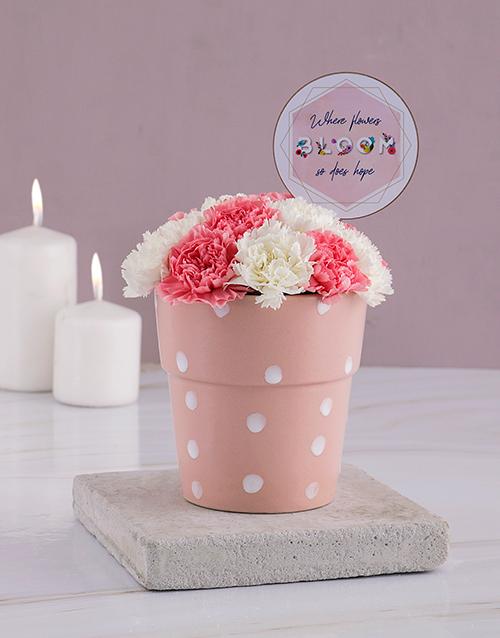 carnations: Flowers Bloom Carnations Pot!